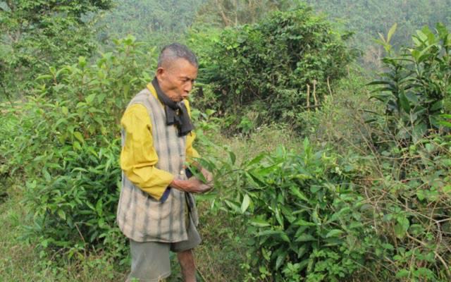 Già làng Cao Ké ở bản Kè, xã Lâm Hóa đã trồng đủ các loại cây thuốc Nam để chữa bệnh.