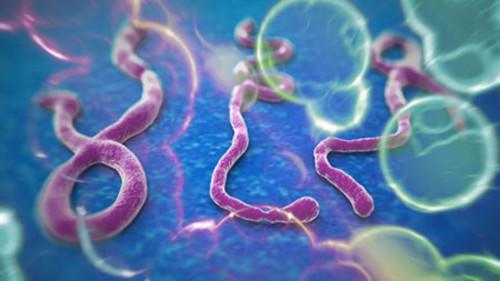Nỗi ám ảnh khủng khiếp của bác sỹ ở tâm dịch Ebola - Ảnh 4