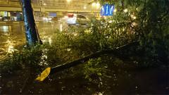 Cành cây bị gẫy trên phố Tây Sơn.