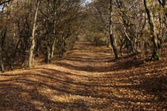 Khu rừng Hoia Baciu ở Transylvania, Romania. (Ảnh: Bortescristian qua Compfight)