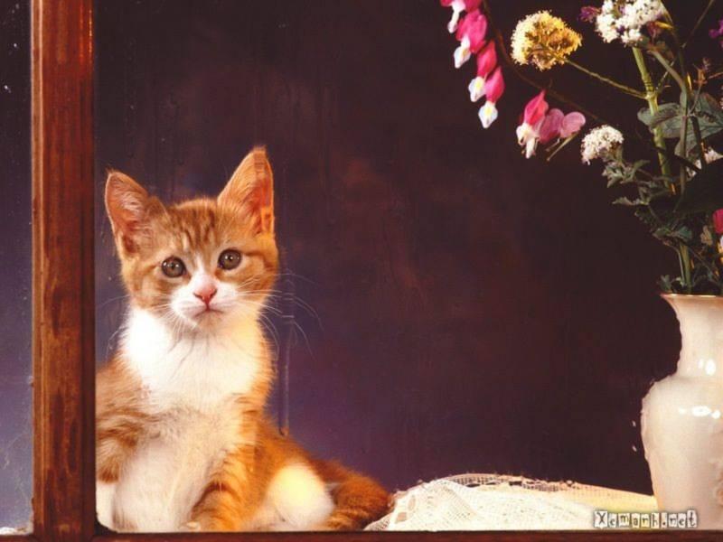 mèo con, de thuong, dang yeu,