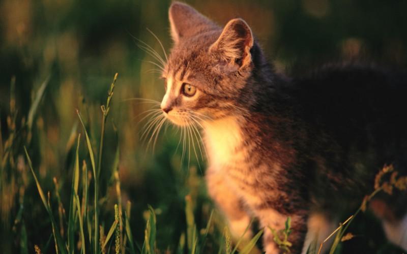 mèo con dễ thương,