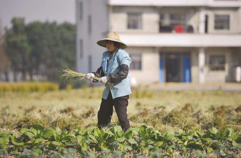 Một người nông dân thu hoạch vụ mùa ở làng Cảng Trung thuộc tỉnh Chiết Giang, Trung Quốc ngày 19/11/ 2013. Đây là quốc gia có sự bất bình đẳng kinh tế nghiêm trọng, với 468 triệu dân chi tiêu ít hơn 2 đô la mỗi ngày. (Ảnh Internet)