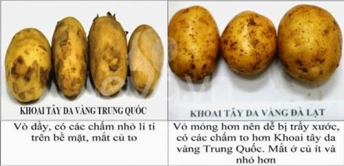 rau quả đà lạt, rau quả Trung Quốc, khoai tây, hành tây, dâu tây, cà rốt, bắp cải,