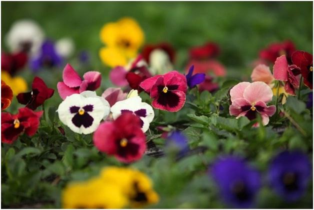 hoa 10