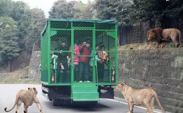 Lạ nhất tuần qua: Sở thú ngược đời nhốt người vào chuồng thay vì nhốt động vật 1