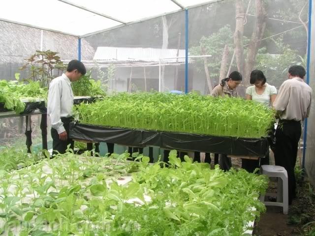 Vườn rau sạch. Ảnh afamily