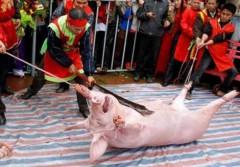 Nghi thức chém lợn của Lễ hội Chém lợn.