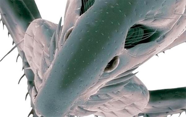 Điều gì xảy ra nếu toàn bộ kí sinh trùng trên Trái đất biến mất?