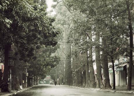 Hàng cây sao đên trên đường Lò Đúc do người Pháp trồng. Ảnh: Lịch Sử Việt Nam qua ảnh