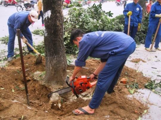 """""""Con đường đẹp nhất Việt Nam"""" tan hoang sau khi chặt cây xanh"""