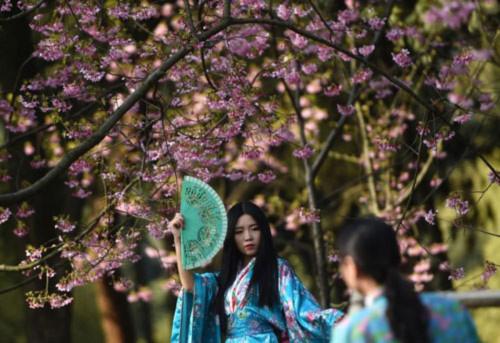 Đắm chìm trong sắc hoa anh đào nở rộ khắp châu Á - 4