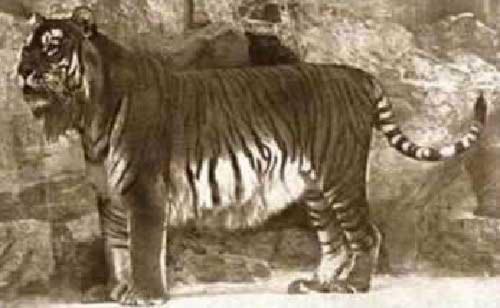 Những động vật tuyệt chủng cổ đại