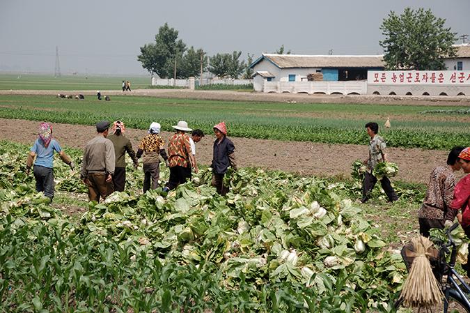 Nông dân Triều Tiên. (Ảnh: wiki)