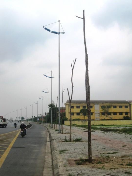 Hàng cây chết khô trơ trọi trên đường 5 kéo dài