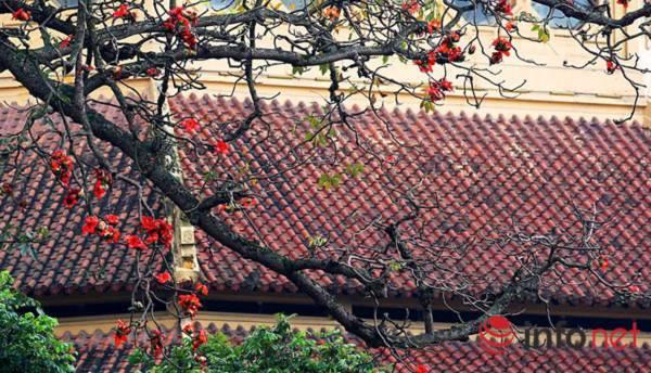 Hà Nội tháng Ba, miên man mùa hoa gạo - 1