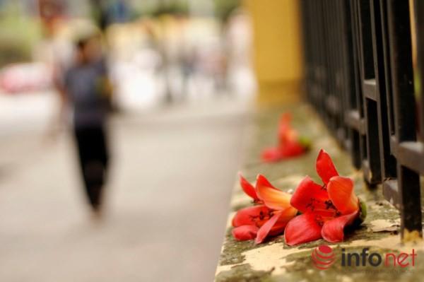 Hà Nội tháng Ba, miên man mùa hoa gạo - 4