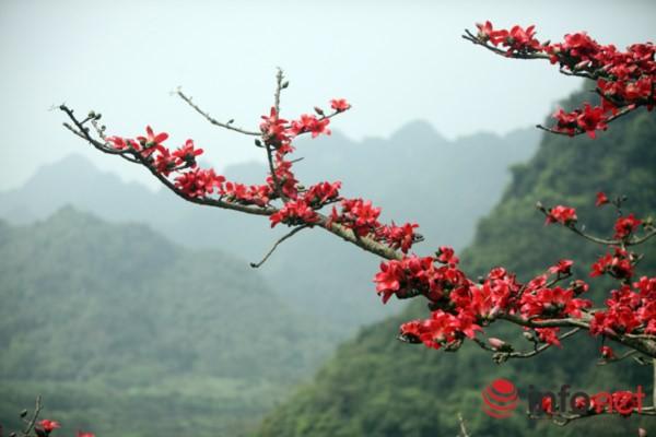 Hà Nội tháng Ba, miên man mùa hoa gạo - 10