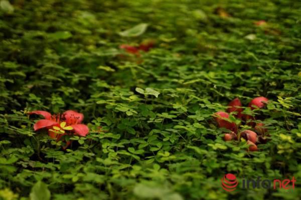 Hà Nội tháng Ba, miên man mùa hoa gạo - 2