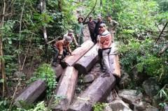 Nhóm lâm tặc phá rừng rồi ngang nhiên tung chiến tích lên facebook. (Ảnh: facebook)