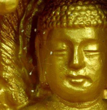 Hoa trên tượng Phật: Hoa Ưu Đàm Bà La được trông thấy nở trên tượng Phật trong thiền viện Tu Di Sơn ở Suncheon, Hàn Quốc vào tháng 2 năm 2005.