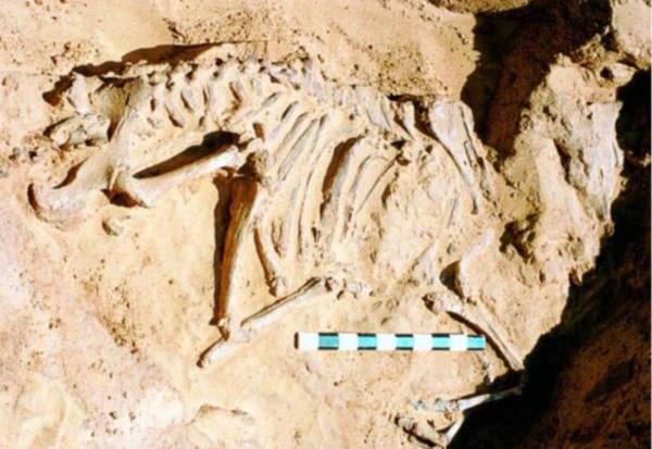 Nabta Playa – Nơi chôn giấu những bí ẩn về một nền văn minh tiền Ai Cập