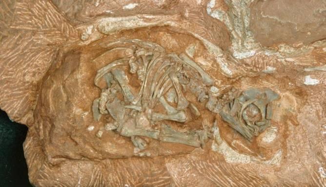 tâm linh, khảo cổ, hóa thạch khủng long, cổ sinh vật học, Bí ần, Bài chọn lọc,