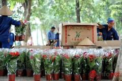 Theo ghi nhận của PV Infonet, hoa trồng xung quanh Hồ Gươm được đựng hoàn toàn trong những thùng giấy có in chữ Trung Quốc. Ảnh infonet