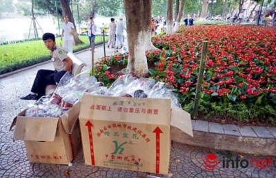 Những thùng đựng hoa toàn có nhãn hiệu Trung quốc
