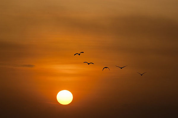 Mặt trời lặn