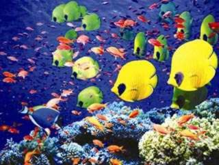Tại sao cá biển có nhiều màu sắc hơn cá sông?