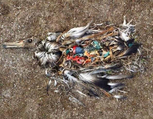 Chúng ta đang ăn rác thải nhựa hàng ngày?