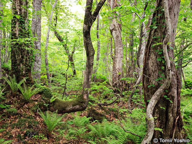 Trên những đỉnh núi này hiện còn tồn tại những rừng sồi nguyên thuỷ với tuổi trung bình khoảng 8.000 năm.