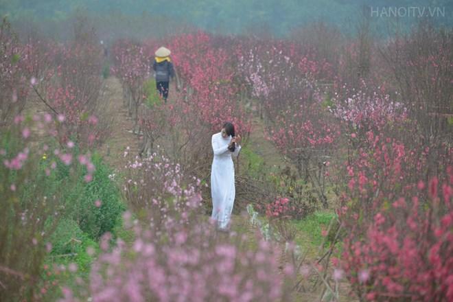 Thiếu nữ tạo dáng bên làng hoa Nhật Tân. Ảnh hanoitv