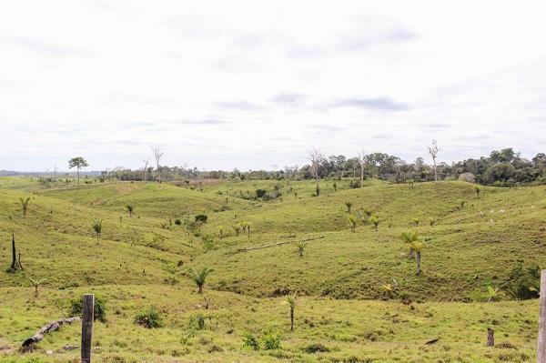 Cảnh quan xung quanh dòng sông nước sôi đang bị phá hoại do khai thác gỗ trái phép. Ảnh Gizmodo