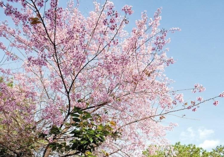mọi miền đất nước, hoa xuân, Bài chọn lọc,