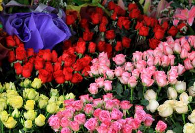 Dịp Valentine năm nay, hoa hồng tăng giá gấp 3 lần. Ảnh vnexpress