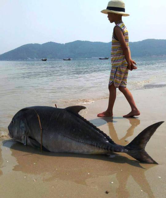 Một con cá vẩu 35kg dạt vào bờ biển xã Lộc Vĩnh vài ngày trước