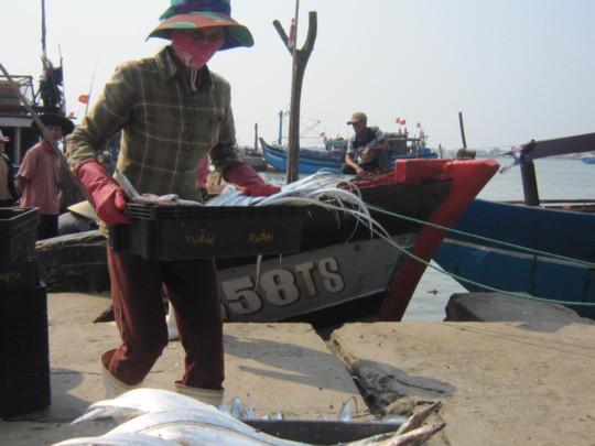 Ngư dân chỉ bán được loại cá hố để xuất khẩu