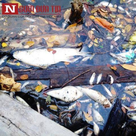 Kình ngư 'mất tích' sau công bố bí mật về ống xả thải của Formosa - Ảnh 1