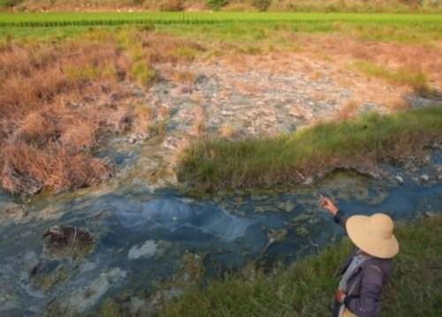 Chính quyền điên cuồng vơ vét tài nguyên gây ô nhiễm môi trường, màu xanh cây cối đi về đâu? (Ảnh: Internet).