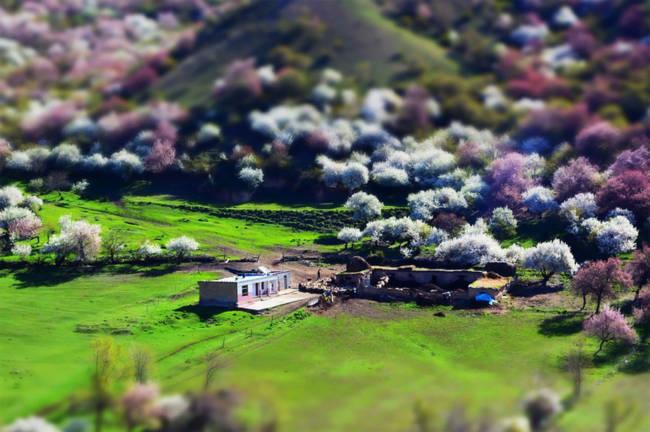 Thung lũng hoa mai hương sắc đẹp đến cạn lời ở Tân Cương - Ảnh 11.
