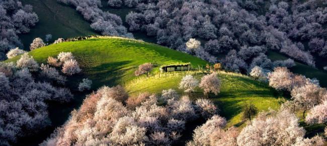 Thung lũng hoa mai hương sắc đẹp đến cạn lời ở Tân Cương - Ảnh 2.