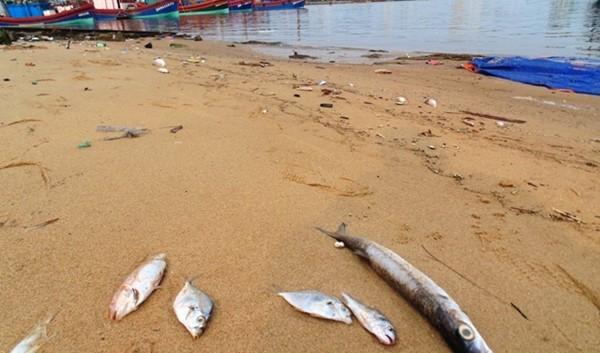 Cá chết trôi dạt vào bờ sông Nhật Lệ (TP. Đồng Hới, Quảng Bình) sáng ngày 25/4. (Ảnh: Lê Phi Long/laodong.com.vn)