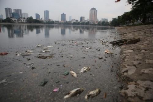 Chủ tịch Nguyễn Đức Chung xuống hiện trường chỉ đạo xử lý cá chết - Ảnh 1
