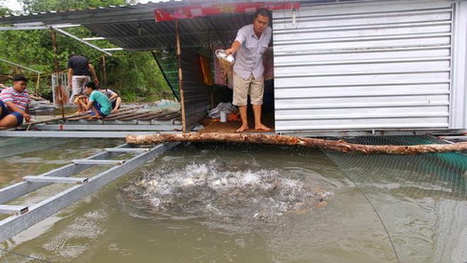 Người nuôi cá lồng bè ở phường Tân Phú, quận Cái Răng (TP Cần Thơ) đang lo lắng trước thông tin Nhà máy giấy Lee & Man sắp đi vào hoạt động - Ảnh: Chí Quốc