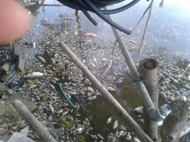 Cá chết trắng hồ Mật Sơn ở phường Đông Vệ (TP Thanh Hóa) nhiều ngày nay, gây ô nhiễm môi trường nghiêm trọng - Ảnh: Hà Đồng - tuoitre.vn