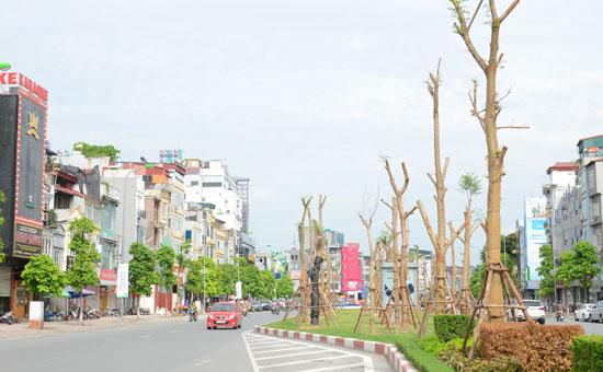 Hàng phượng vĩ trồng trên dải phân cách giữa đường Xã Đàn. Ảnh: Ngọc Hải – kinhtedothi.vn