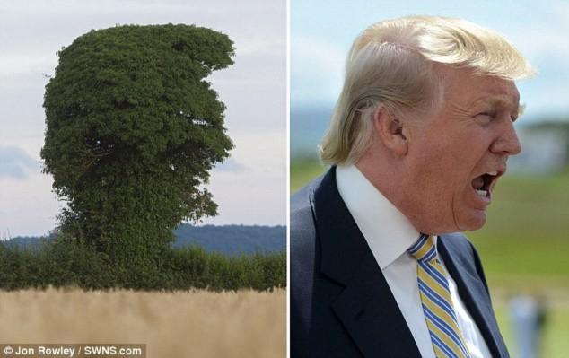 Cây lạ có hình dạng giống hệt tỷ phú Trump đang gào hét - 1