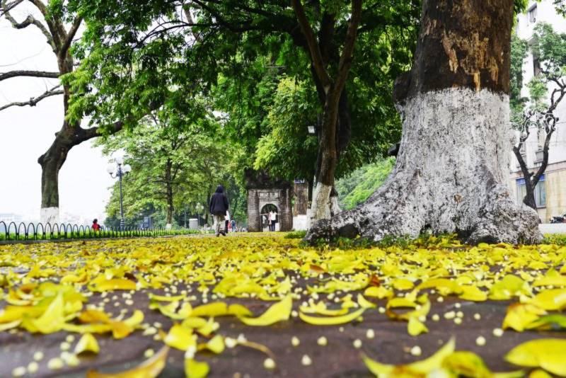 Vẻ đẹp mùa thu Hà Nội,